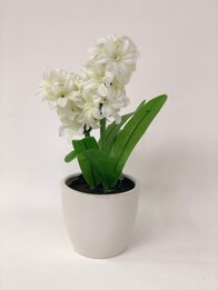 22cm Hyacinth in Pot