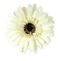 Artificial Gerbera - Cream