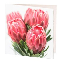 Pink Proteas Gift Card